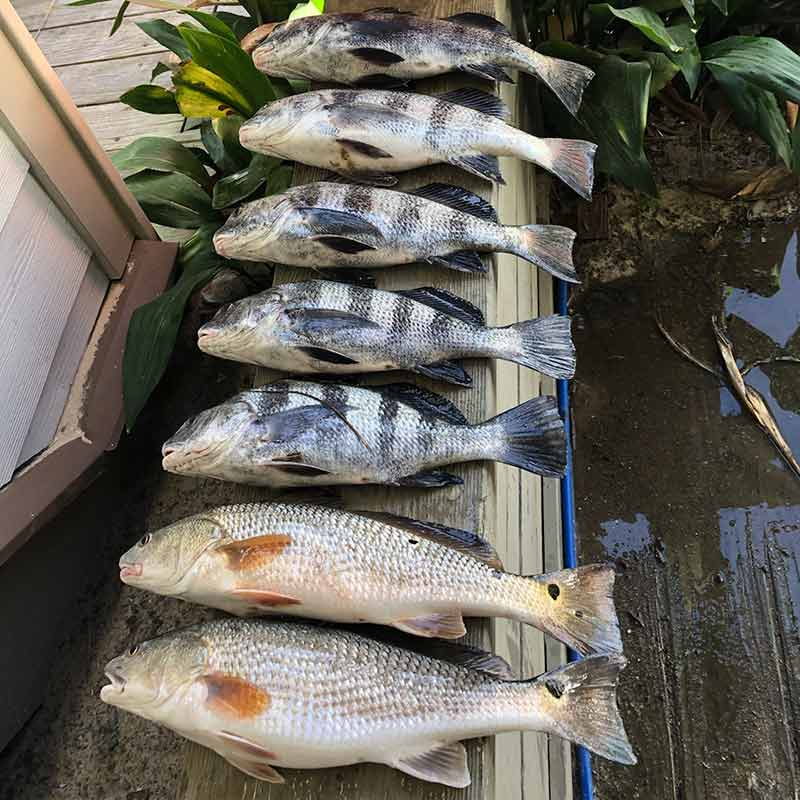 AHQ INSIDER Edisto Island (SC) Spring 2021 Fishing Report – Updated May 6