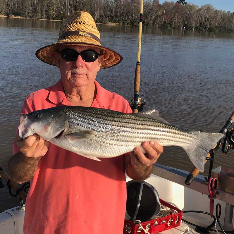 AHQ INSIDER Lake Hartwell (GA/SC) Spring 2020 Fishing Report – Updated March 31