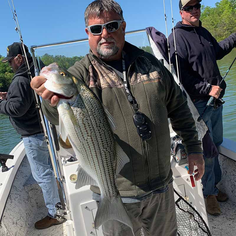AHQ INSIDER Lake Hartwell (GA/SC) Spring 2020 Fishing Report – Updated April 29