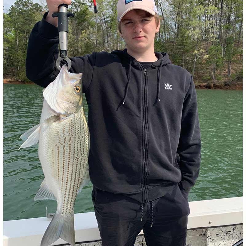 AHQ INSIDER Lake Hartwell (GA/SC) Spring 2020 Fishing Report – Updated April 15
