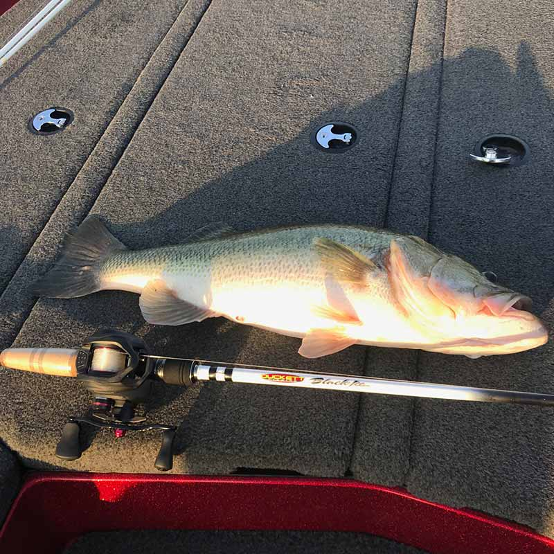 AHQ INSIDER Lake Murray (SC) Fall 2020 Fishing Report - Updated September 11