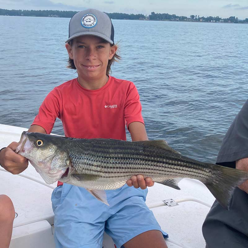AHQ INSIDER Lake Murray (SC) Summer 2020 Fishing Report - Updated July 29