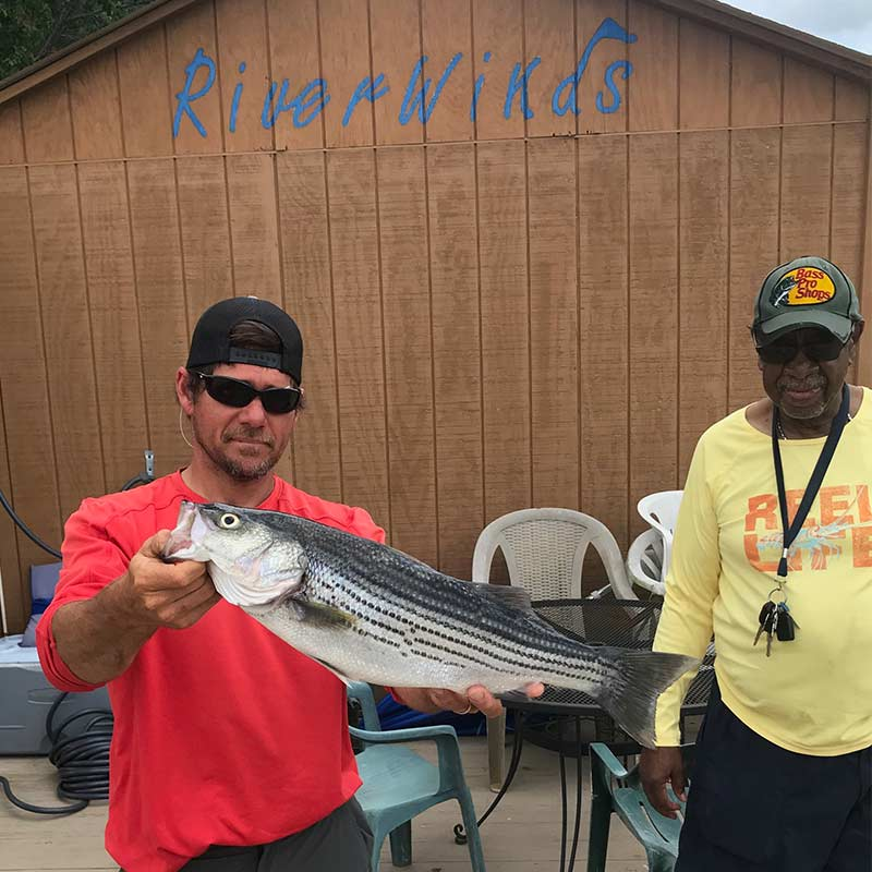 AHQ INSIDER Lake Murray (SC) Summer 2020 Fishing Report - Updated June 26