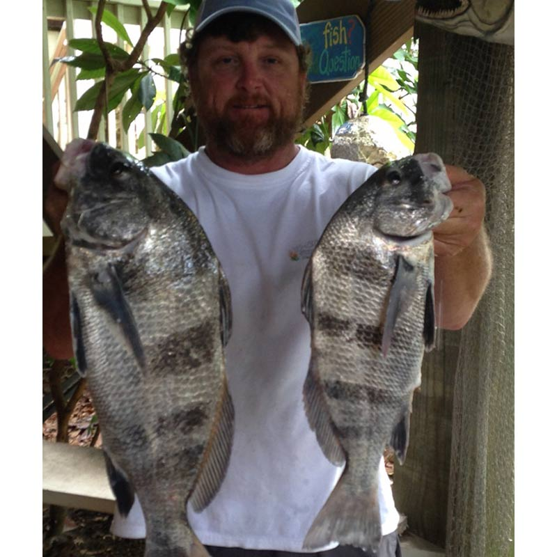 AHQ INSIDER South Grand Strand (SC) Summer 2020 Fishing Report – Updated June 15