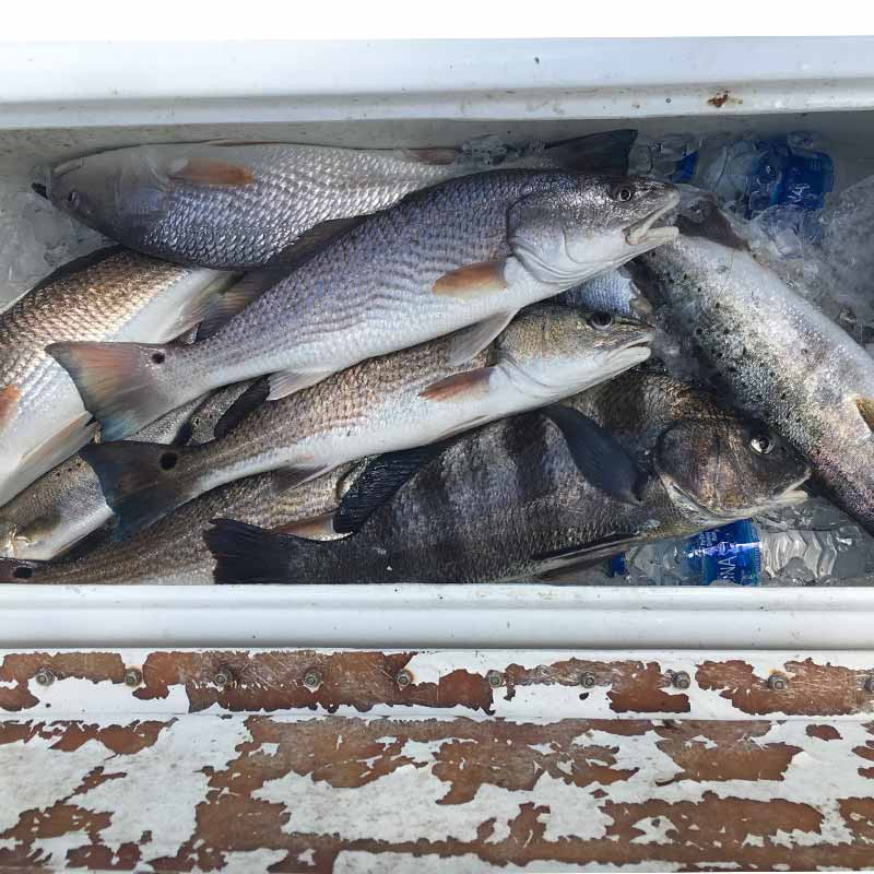 A nice box caught this week with Captain Ron Davis, Jr.