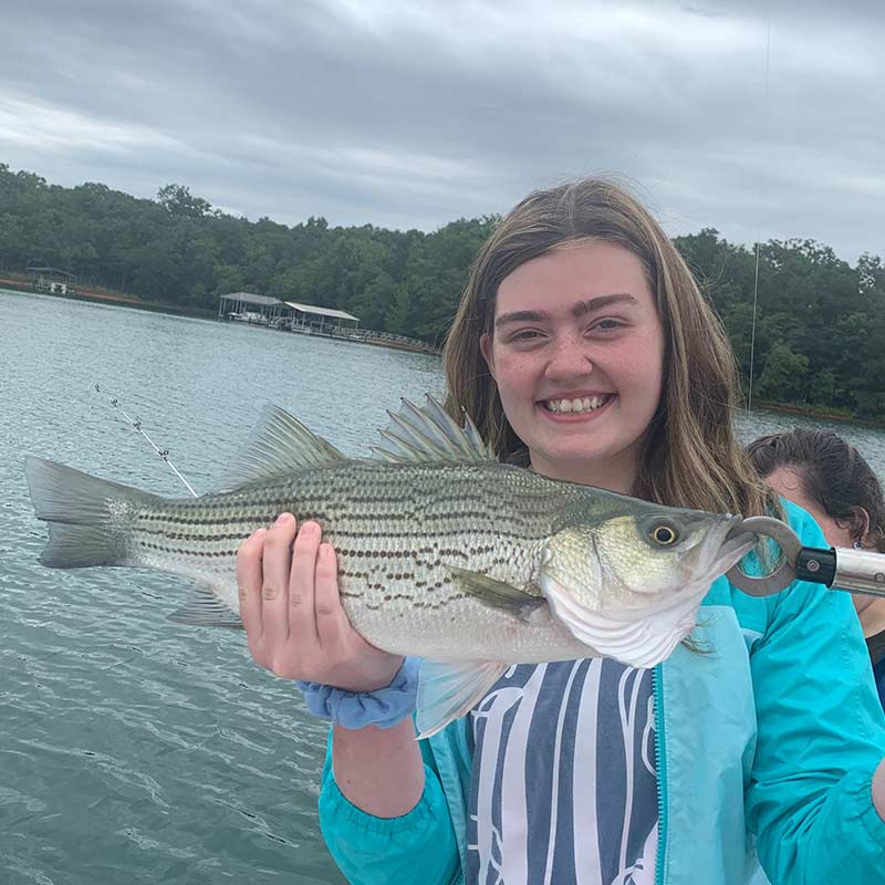 A hungry hybrid caught this week on Lake Hartwell