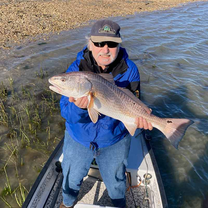 A nice redfish caught in the shallows this week with Captain Kai Williams