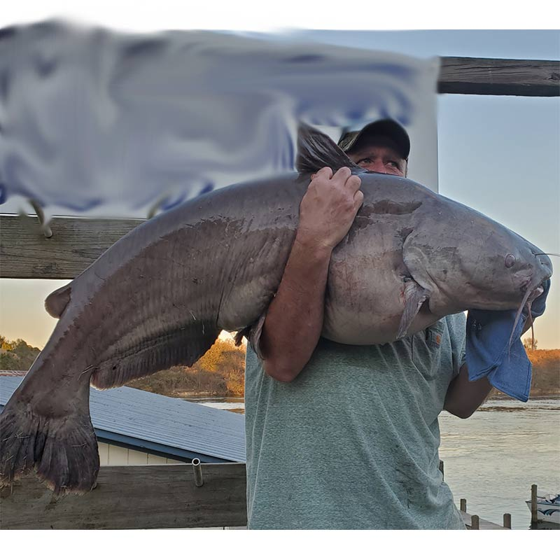 A monster catfish caught with Captain William Attaway