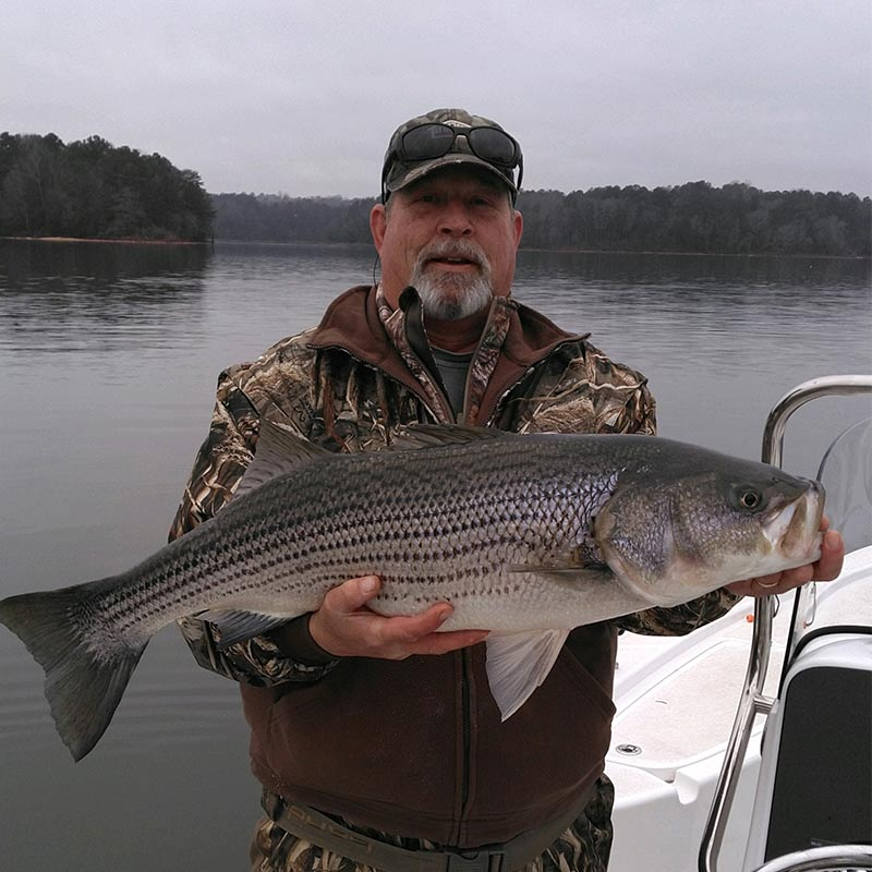 A nice striper caught this week with Jerry Kotal