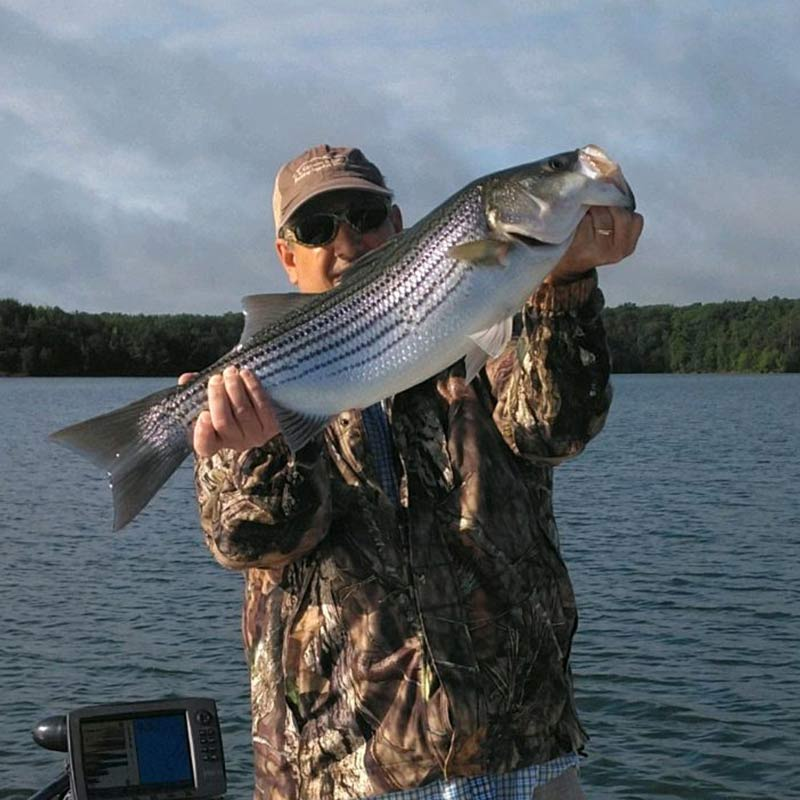 A nice striper caught this week after a rain storm with Jerry Kotal