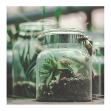 Load image into Gallery viewer, We all step on snails:  A Poetry & Terrarium Experience