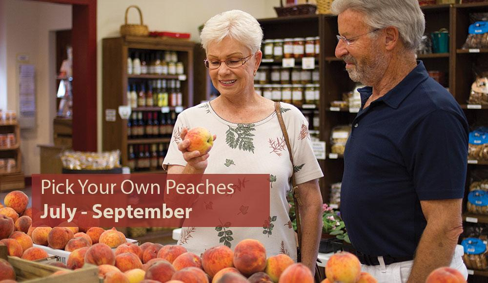 Pick Your Own Peaches July thru September