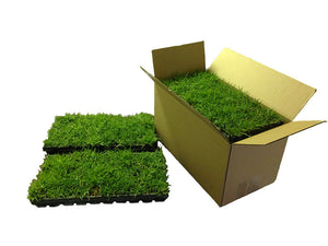 Zoysia plug trays a packed up to 5 per box