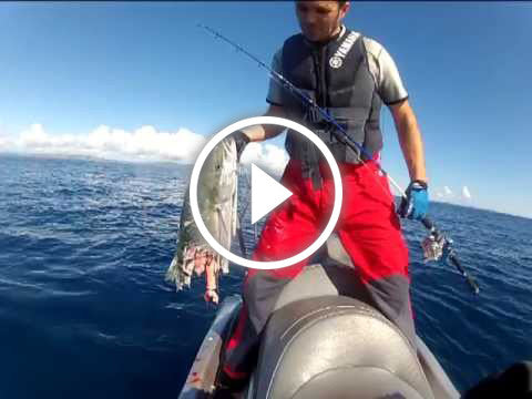 Kingfish and Shark vs Jetskifisherman