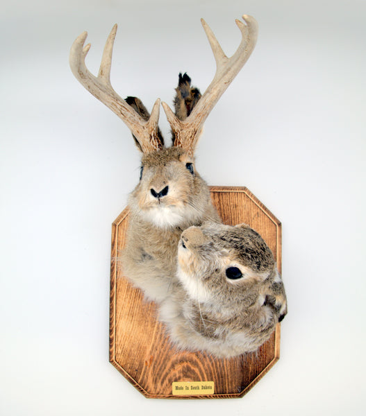Head Mount Jackalope Buck & Doe - Wall Drug Store