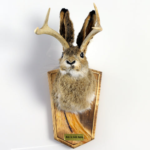 Head Mount Jackalope