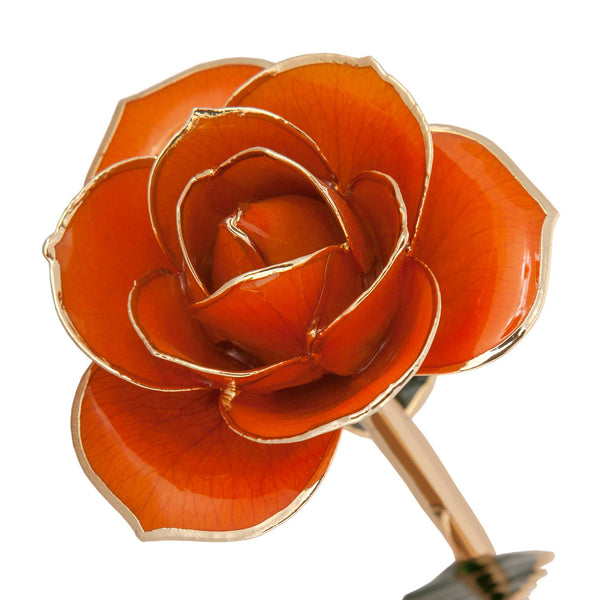 Juicy Orange 24K Gold Dipped Rose - Wall Drug Store