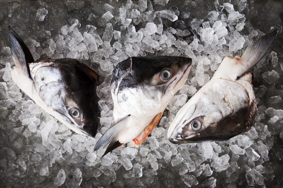 Wild Sockeye Heads and Collars - Loki Fish Company