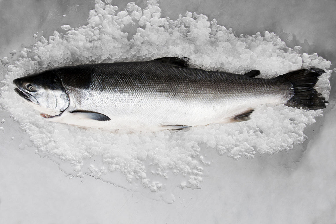 Whole Wild Coho Salmon - Loki Fish Company