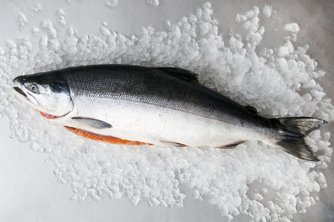 Whole Wild Sockeye Salmon - Loki Fish Company