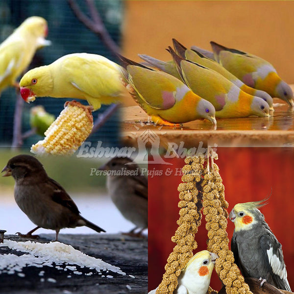 Feed food and water to birds and pigeons