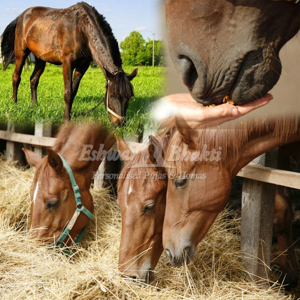 Feed food to horses