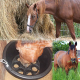 Feed food to a horse