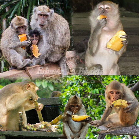 Give food to Monkeys