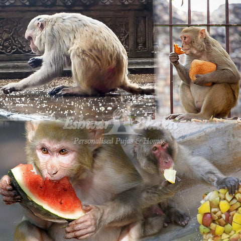 Feed food to monkeys