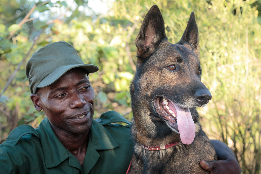 Ranger With Dog