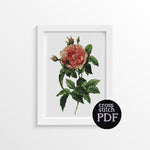 Rosa Gallica Regalis Cross Stitch Pattern