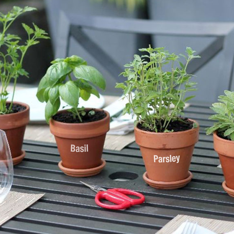 Garden Herb Pot Decals - Type 1