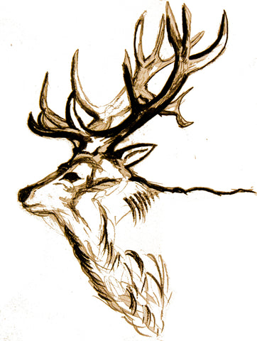 J Boult Designs Drawing of Stag