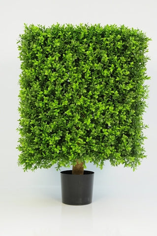 Boxwood Cube - PlantPeople