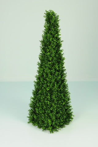 Boxwood Spire - PlantPeople