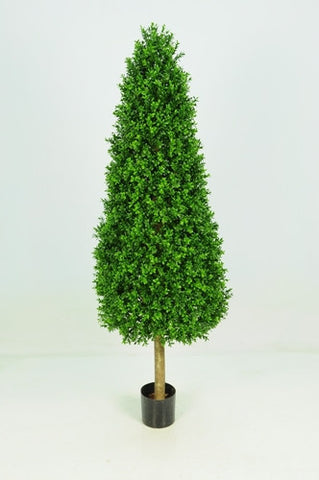 Boxwood Tower - PlantPeople