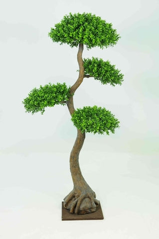 Boxwood Tree x4 Heads - PlantPeople
