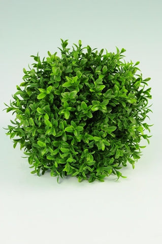 Boxwood Ball - PlantPeople