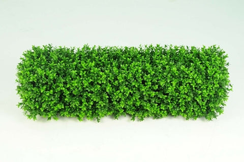 Boxwood Hedge - Small - PlantPeople