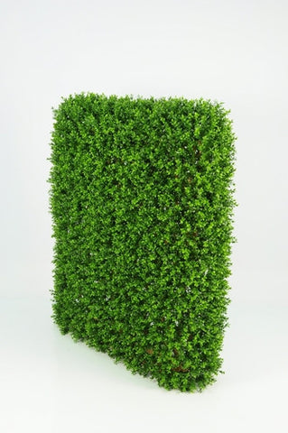 Boxwood Hedge - Large - PlantPeople