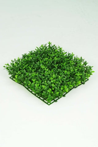 Boxwood Tile - PlantPeople
