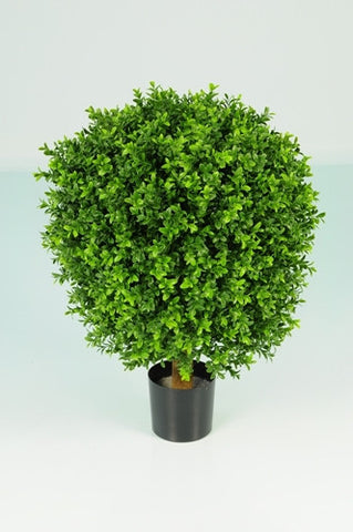 Boxwood oval ball in pot - PlantPeople