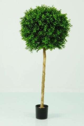 Boxwood Ball Tree - PlantPeople
