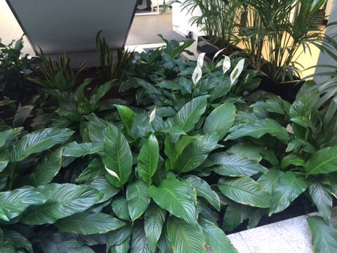 General Office Planting Gallery - PlantPeople