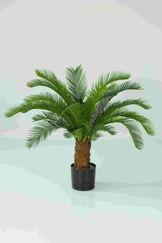 Baby Cycus Palm - PlantPeople