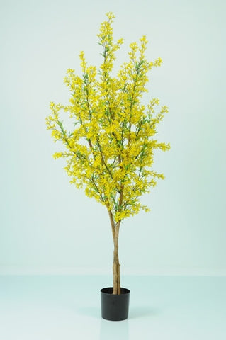 Forsythia - PlantPeople