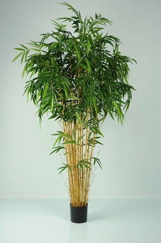 Bamboo Natural - PlantPeople