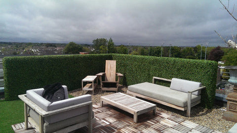 Artificial Hedging- Penthouse. - PlantPeople