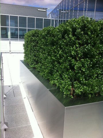 Office Rooftop Hedging. - PlantPeople