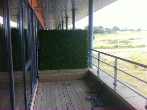Balcony Hedging - PlantPeople